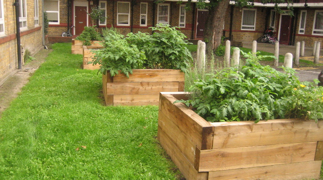 Vegetable planters at Whites Grounds